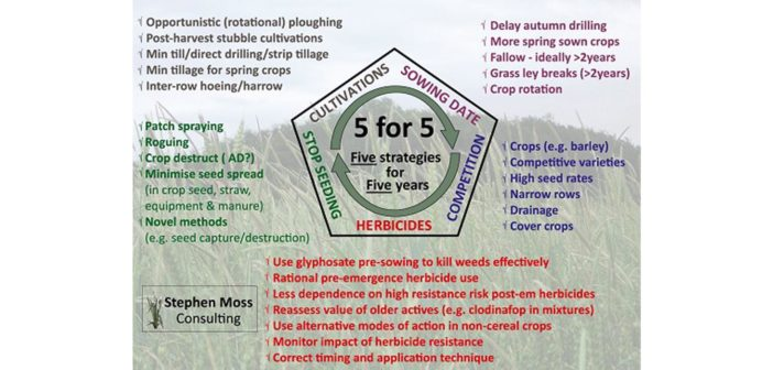 Black grass management is like dieting says weed expert