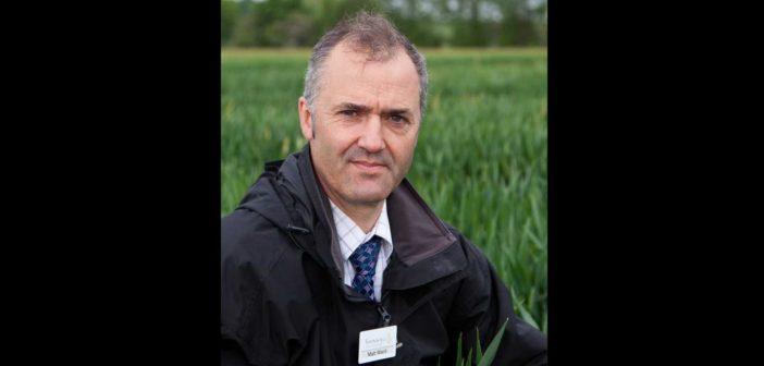 Plan backwards for better yields in spring barley
