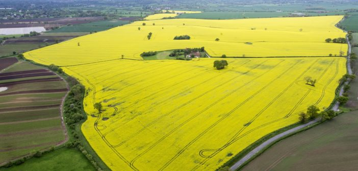 English OSR area at 16-year low