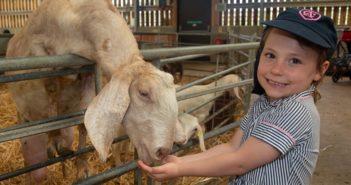 Essex's original farm park celebrates 35 years of telling the farming story