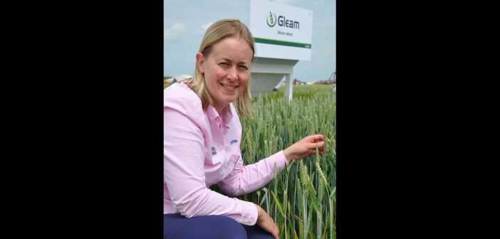 'Wide window wheats' offer response to latest agronomic threats