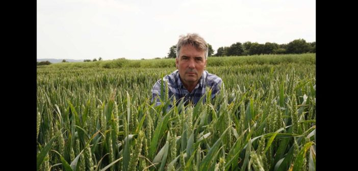 Late drilling window still open – but correct variety choice is crucial to success