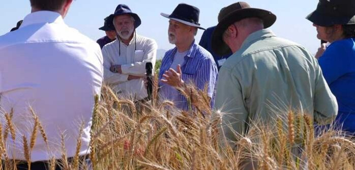 Large-scale study reveals wheat diversity for crop improvement