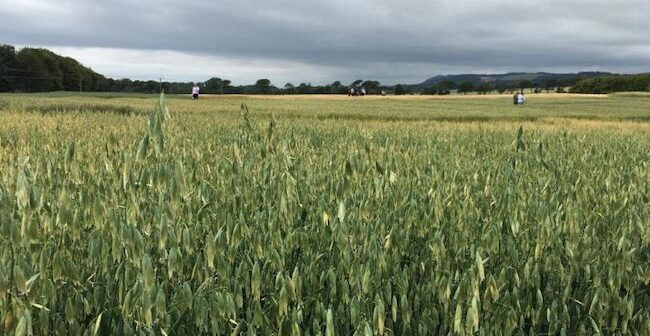 TOP TIPS For Spring Oat Production