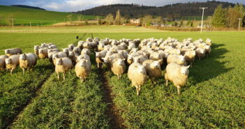 Can livestock grazing of winter cereals aid soil biology?