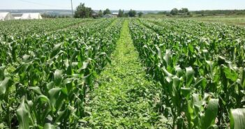 Cover crop funding scheme to reduce nitrate levels in groundwater extended
