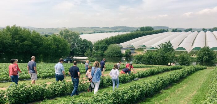 LEAF Open Farm Sunday 2021: Size does matter this year