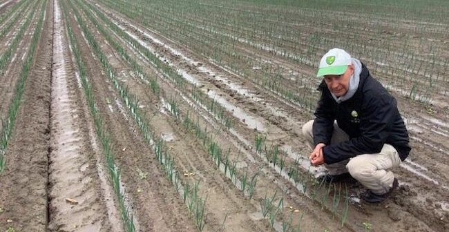 Plugging the gap in leek weed control